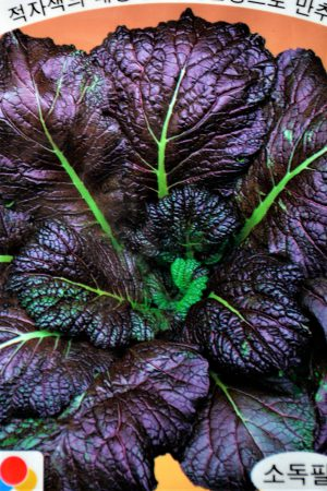 Musztardowiec fioletowy, gorczyca sarepska, liść musztardowy (Brassica juncea)