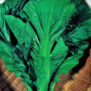 Musztardowiec zielony, gorczyca sarepska, liść musztardowy (Brassica juncea)